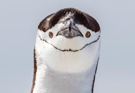[술기로운 동물원 생활] 턱끈펭귄 │ 동물원 수의사가 남극에 간 까닭은?