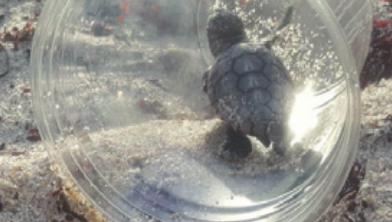 [과학뉴스] 플라스틱 쓰레기에 고통받는 해양동물들