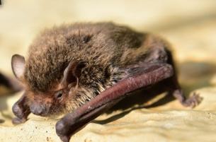 [야생동물이 사람을 두 번 만났을 때] 박쥐의 겨우내 도시살이