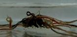 [한페이지 뉴스] '뭉치면 강한' 검은벌레 로봇에 활용한다면?