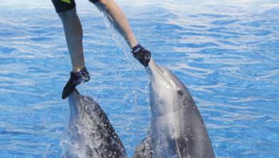 [시사과학] 동물 학대 논란, 수족관 고래 타기 체험 사라진다!