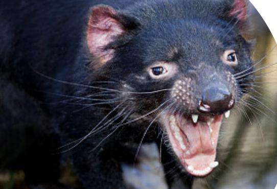 [숫자뉴스] 멸종 위기 동물 구하려다 요정 펭귄 3000쌍이 사라졌어요!