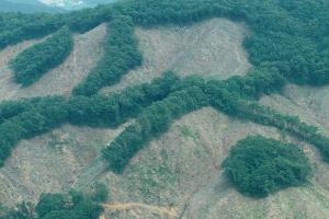 [특집] 숲을 위해 나무를 벤다!