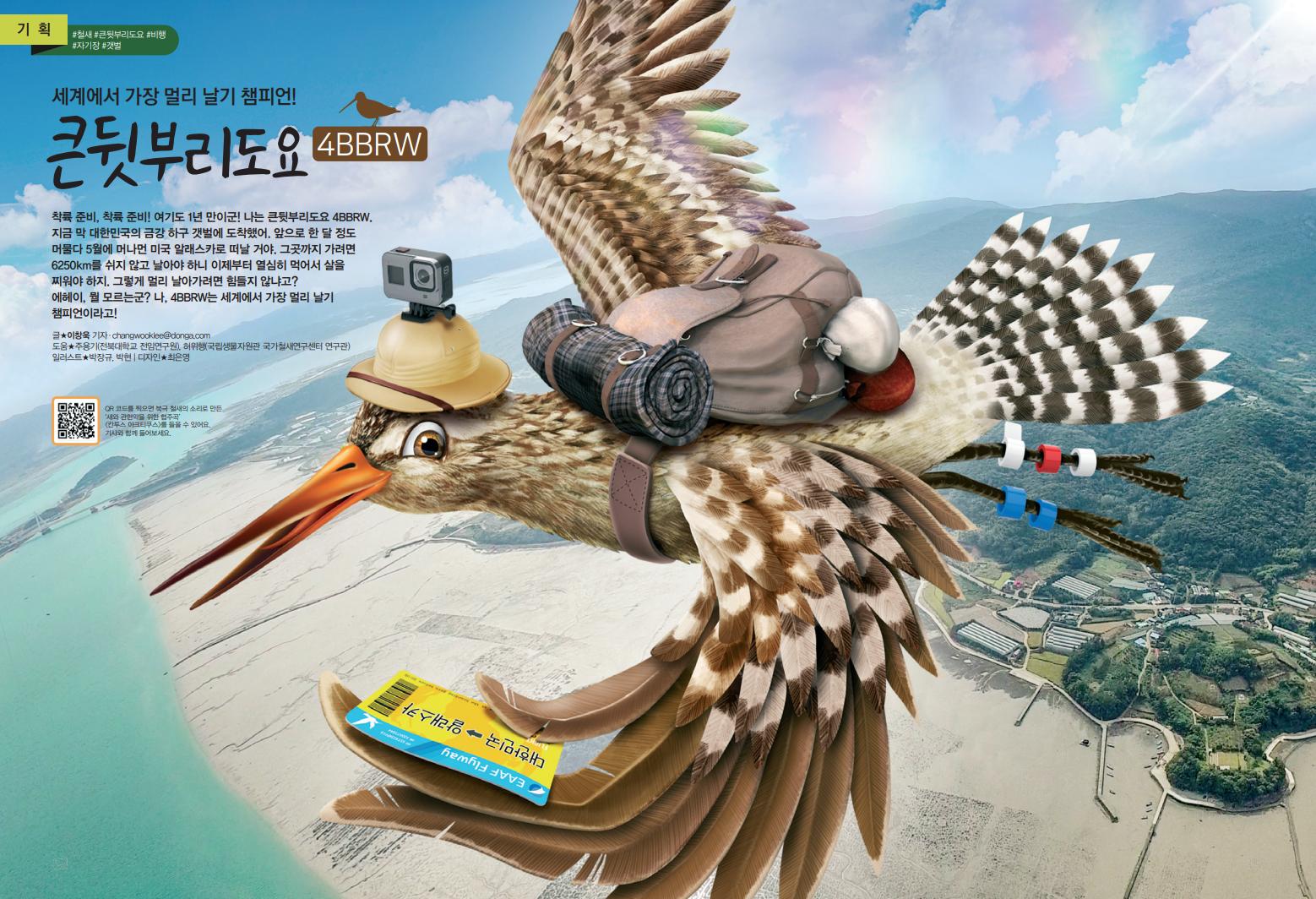 [기획] 세계에서 가장 멀리 날기 챔피언! 큰뒷부리도요
