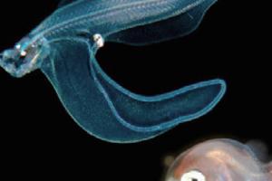 [과학뉴스] 밤바다에서 어린 물고기가 반짝반짝!