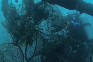 [특집] 물고기를 살리려 바다로 뛰어든 사람들!