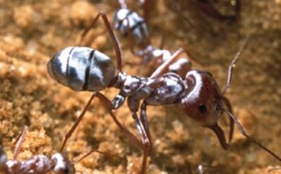 [수학 잘하는 동물 친구들] 사막개미의 길 찾기 비결은?