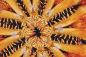 [과학 뉴스] 1억 8200만 년 전부터 이 모습?! 심해생물 오피오주라