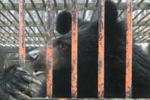 [할 말 있어요!] 사육곰 두 마리가 농장에서 탈출했다? 어린 사육곰이 세상을 떠난 이유